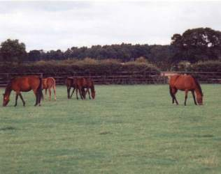 Mares & Foals at West Moor Stud. Click for a larger image.